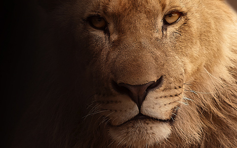有它在,叢林之王號都排不上欸..! 世界上最強大的動物 TOP 5