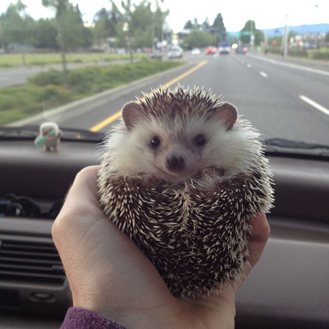 嘿嘿~其實我都窩在主人的座駕裡~
