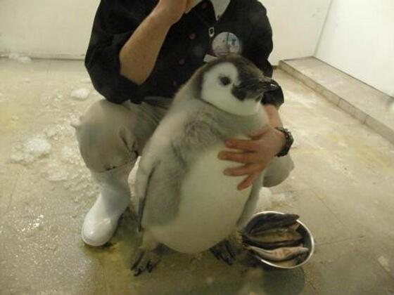 大家吼!來自南極的阿企,今天為您介紹為什麼我們不是鳥