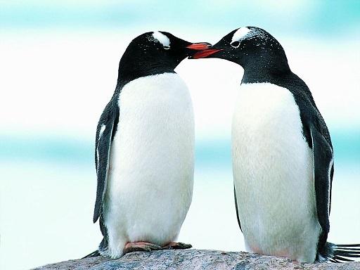 鳥不會一生只選擇一位配偶