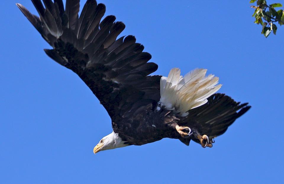 TOP 5 鷹(Eagle) 體長3m以上,銳利的眼神和強有力的爪子讓它成為了天空中的王!