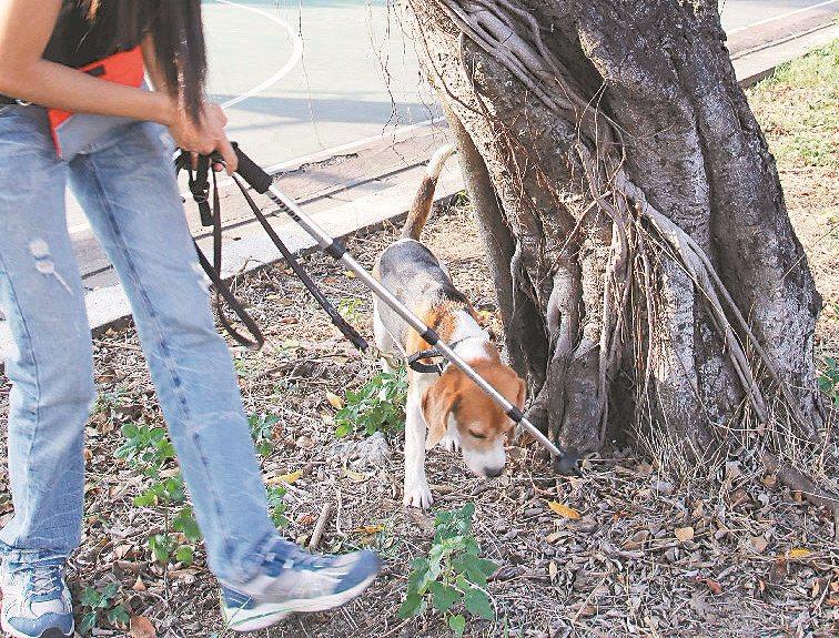 屏東科技大學的工作犬訓練中心訓練各種協助人類工作的狗勾  像是搜救犬、閱讀犬等等  狗樹醫就是其中一種啦~
