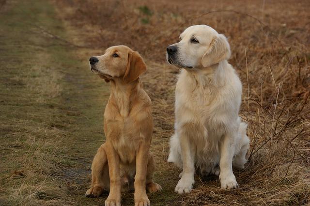 只是被訓練過的狗勾雖然很聽話,但也會耍賴、隨便坐下,還是得靠訓練師去判斷(教訓?)  (隨便坐下好好笑XDD)