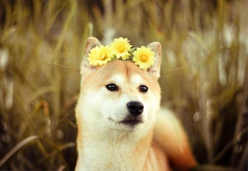 天生一對~~ 這是一段花與汪的邂逅故事