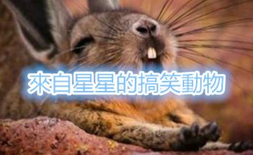 不要笑出來 這些動物也有人性化的一面