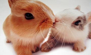啾~❤情人家人友人 都需要一個溫暖的吻❤