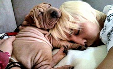 偶像和他們的寵物狗,你最想打包哪兩隻(?)