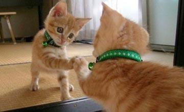 小動物照鏡子?!萌態十足