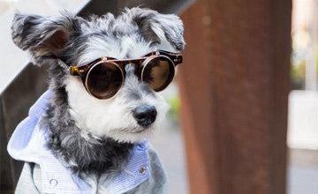 傳說居然是真的..!比人還會穿搭的時尚icon狗的Dailylook