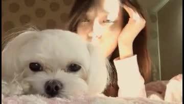 花320萬能讓愛犬再生?韓國「複製狗」技術惹道德爭議
