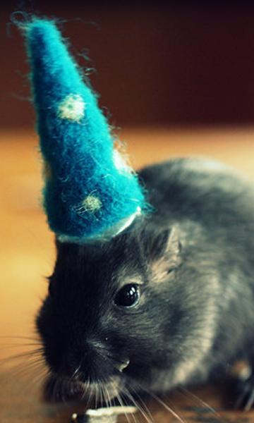由美國攝影師Julie Persons創意拍攝的「戴帽子的沙鼠」