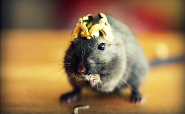 讓小老鼠不再給人髒髒的印象~