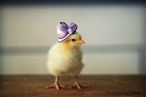 高貴貴婦帽 紫色代表高雅~是不是跟我的氣質很搭?