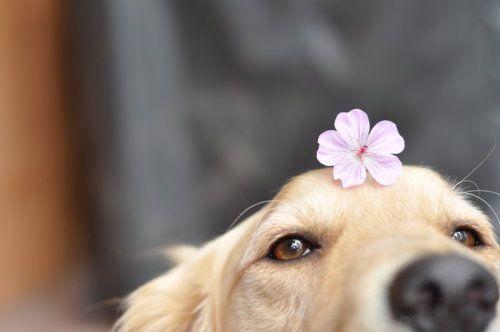 這是一段花與汪的邂逅故事