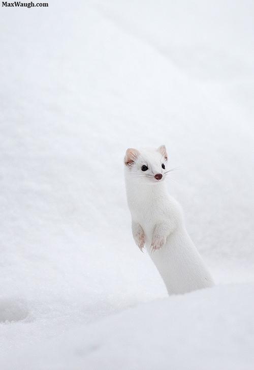 冬天變成白色適應大自然