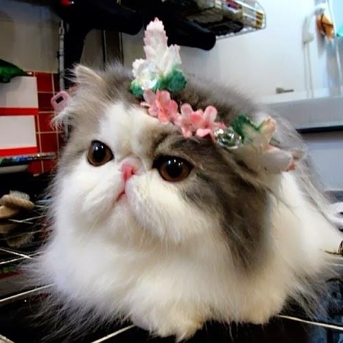 粉紅小花還和我唇色有搭有沒有?
