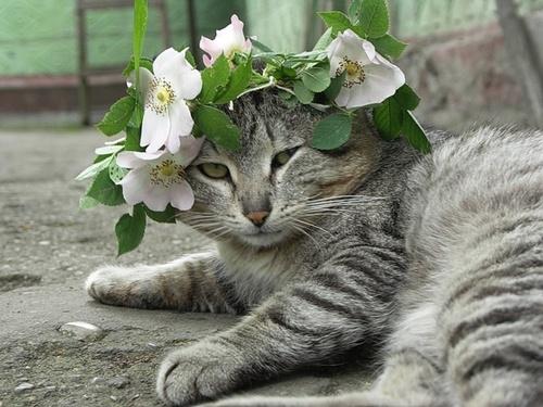 花花草少讓我惡婆婆的形象柔和不少~