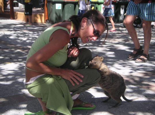 是個好奇心旺盛的小動物喲~ 遇到人的時候不跑開也不攻擊, 牠是這般地容易親近~