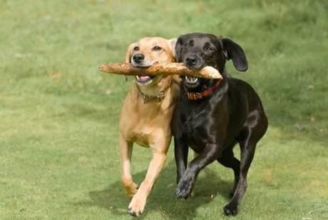 這個習慣讓其他狗類知己也效仿