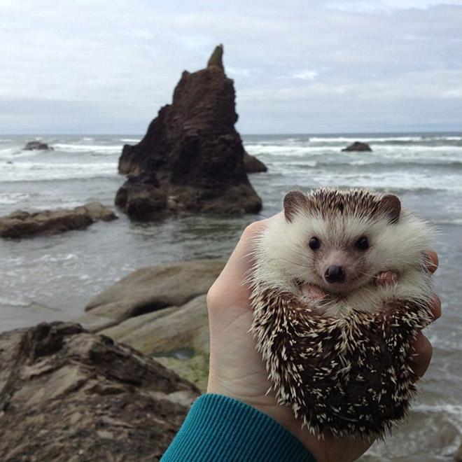 有時去海邊~