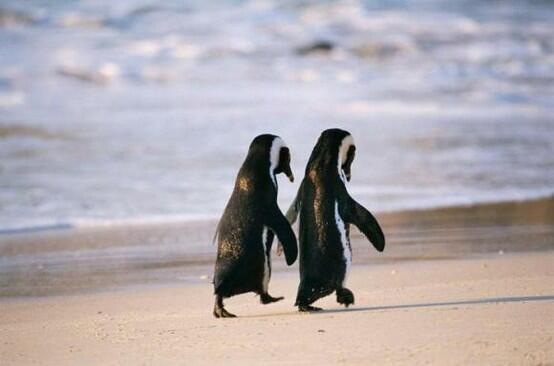 目測是真愛 鳥類不會手牽手