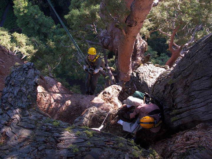 大批人馬挑戰的不只是攝影~ 還包含爬樹的攀登與垂掛技能