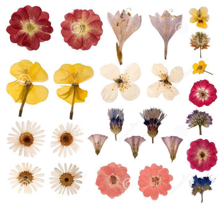 春天花開~許多人曾經做過花朵書籤~ 不過你知道其實你還可以做別的嗎?