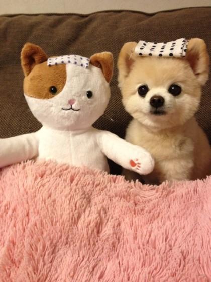 怎麼辦~ 我覺得大勝左邊小貓玩偶