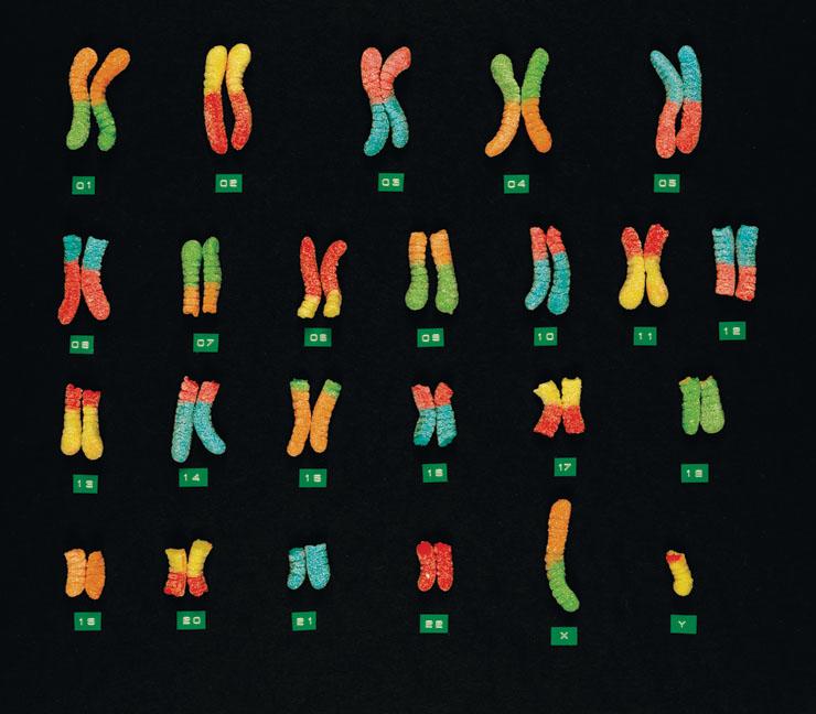 軟糖染色體 瞬間變得口愛~
