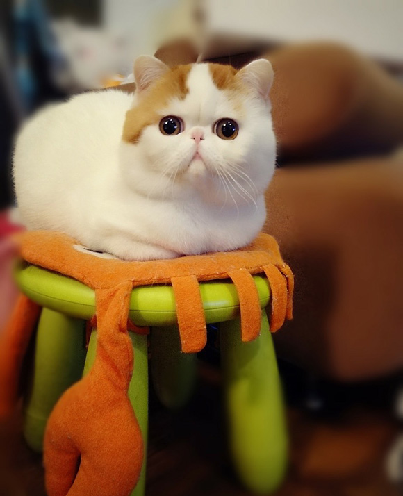 如果你家有一隻貓 讓你無時無刻都想把牠抱進懷裡 不是你愛貓成癡的話...
