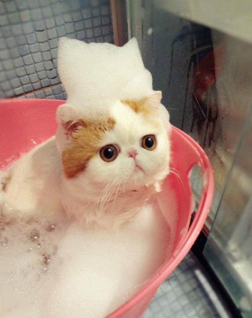在中國就有一隻苦情貓 名叫