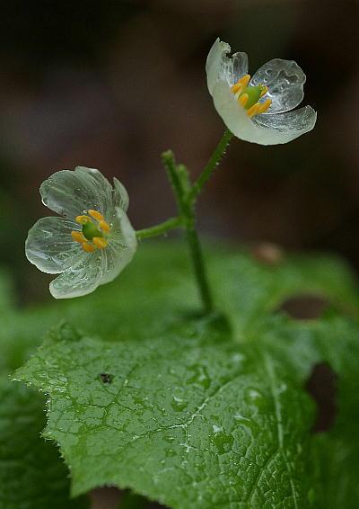 真的好想知道要是可以輕碰它的花瓣會怎樣?