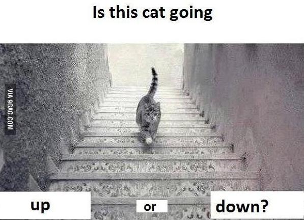 你覺得貓是往上走還是往下走?