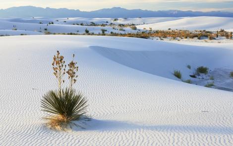 所到之處猶如雪地般白晰 去過的人說 看起來不像海邊看到的淺色沙子 因為它會閃閃發亮 比較像鹽或白雪