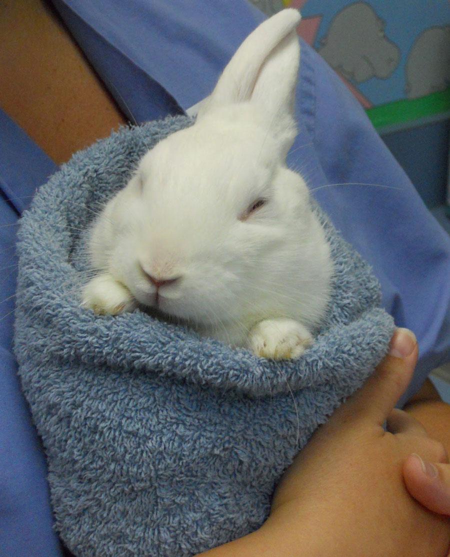 看看小兔兔的手掌 喔~已融化~