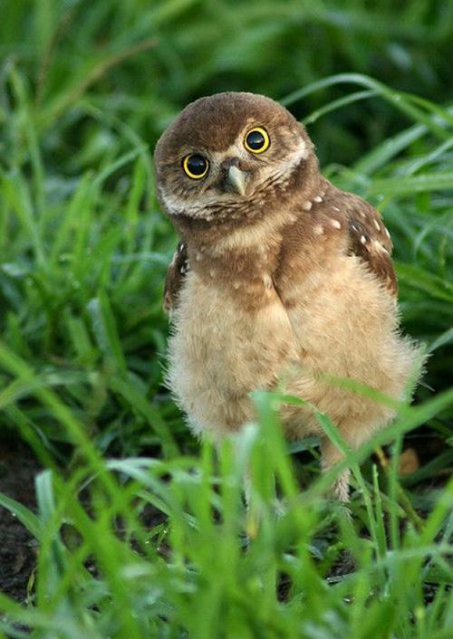 本來對貓頭鷹這類的鳥禽感到陰森恐怖 現在卻完全不會了是吧?