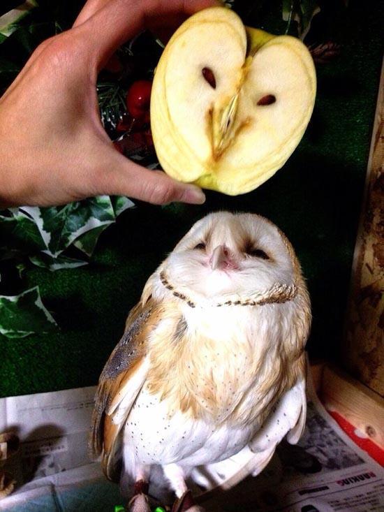 但仔細看~竟然跟蘋果撞臉惹~~ (突然覺得可愛)