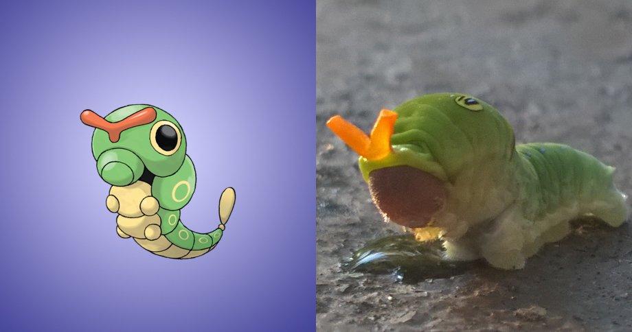 2. 綠毛蟲 原型:綠毛蟲的設計是很典型的毛毛蟲,與柑橘鳳蝶幼蟲相似。 其中與「銀月豹鳳蝶(Papilio troilus)」的幼蟲最為相似。