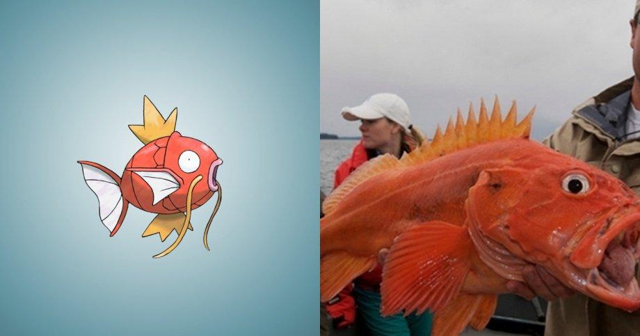 4. 鯉魚王 原型:黃眼岩魚,是岩魚中壽命最長的魚, 它的壽命可達205年之久
