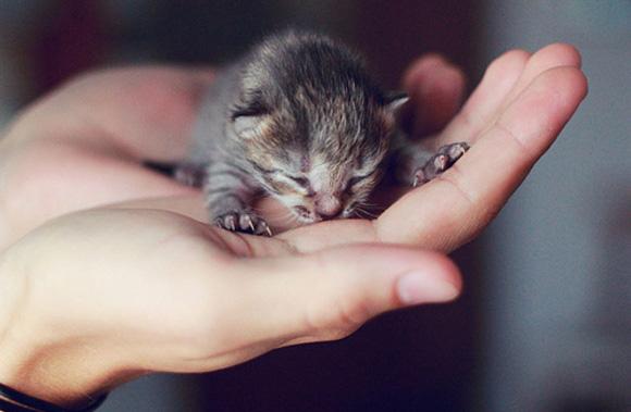 小巧到一個手掌就能完全掌握的喵寶貝, 指甲長得比牠更快呢XD