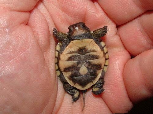 原來小烏龜這麼卡哇伊~