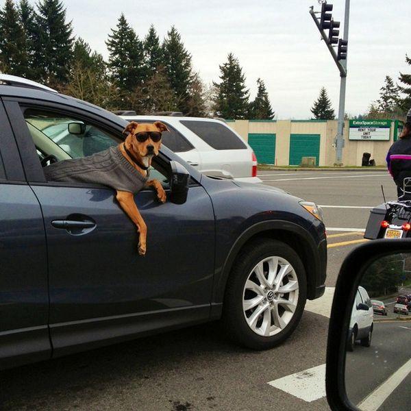 男士們開車兜風時,帶上你的大帥狗,還可以魅力加分!