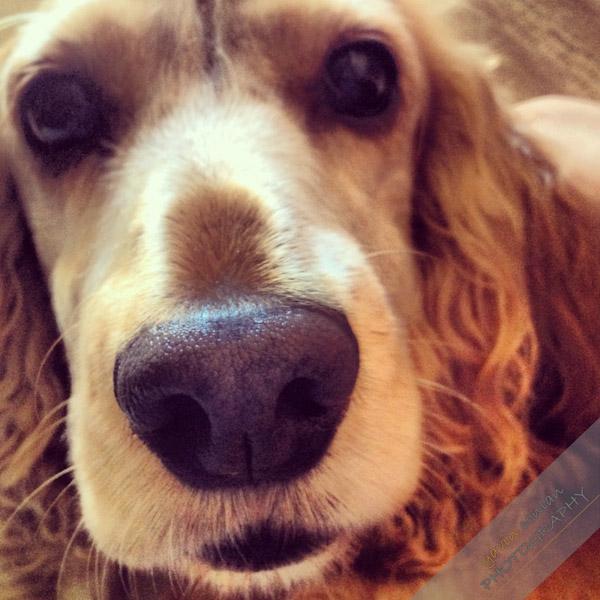 6. 寵物寶貝照 時常上傳自己的愛犬愛貓的可愛照片! (#寶貝 #大鼻子,IG上的話就還會有 #dogstagram #instapet之類的摟~)