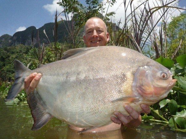 3. 食人魚的親戚Pacu(被戲稱切蛋魚) 因為在2011年時,被發現在巴布亞紐幾內亞, 咬傷兩名入水男性的睪丸,因而被打死!