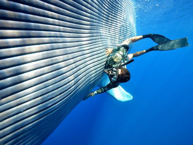 當大王鯨魚在巨大的海洋中游動時,光是他的心臟脈搏跳動的聲音,就有140db!會發出如同戰鬥機引擎發動般的聲音唷!