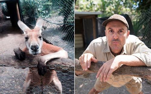 皮爾動物園飼養員David Cobbold為了讓大家在親近動物之餘,能更了解動物、愛護動物,因而開始了這一項可愛的小計畫,鼓勵員工們跟他一起模仿動物的各種姿態和神情,並拍下對比照片,畫面格外幽默逗趣!