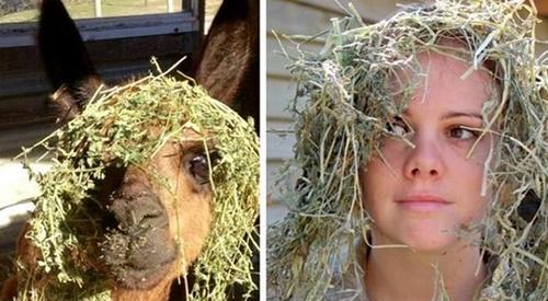 壓倒駱駝的不知道幾根稻草。