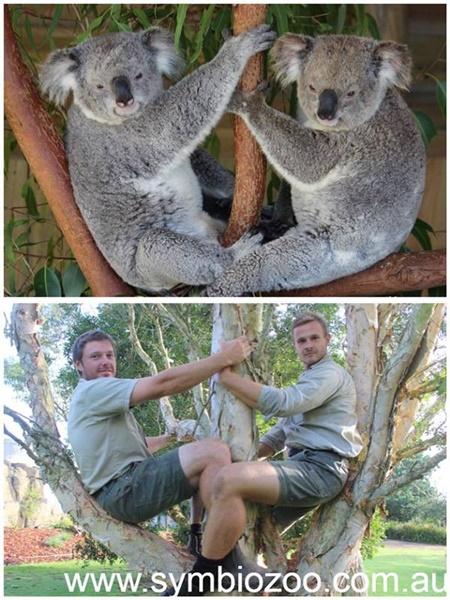 真的可以這樣爬樹嗎XD  唉唷,不管了啦!反正動物做什麼,你就跟著做就對了!連Australia Zoo 澳洲動物園也加入這個串聯行列!