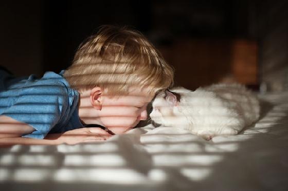 小正太將額頭主動靠近貓咪,親額頭這是一個充滿愛意的動作。