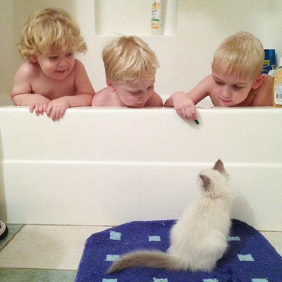 貓咪跑去偷看小正太們洗澡,一點也不會害臊!
